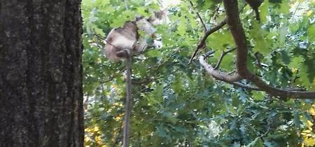 FOTO Il salvataggio della gatta da sette giorni su un albero