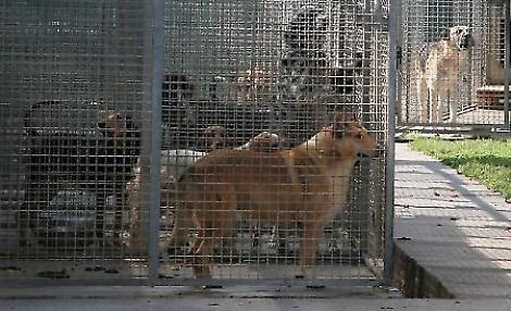 Rifugio del cane il comune ci ripensi calvatone non - Portare il cane al canile ...