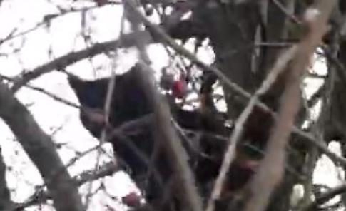 VIDEO L'albero dei gatti lungo il Po