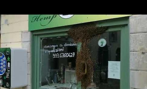 VIDEO Invasione di api in piazza Istria e Dalmazia