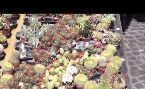 Il video delle Invasioni botaniche