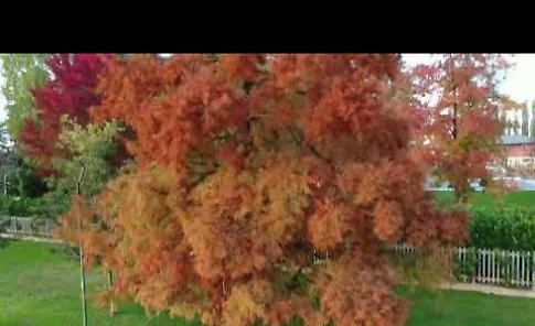 VIDEO I colori dell'autunno sul Po, il volo del drone svela la bellezza