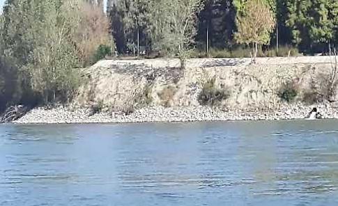VIDEO La draga dell'Aipo in azione davanti al Mandracchio