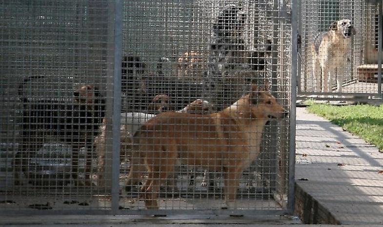 Canile, respinto il ricorso degli Zoofili contro il Comune