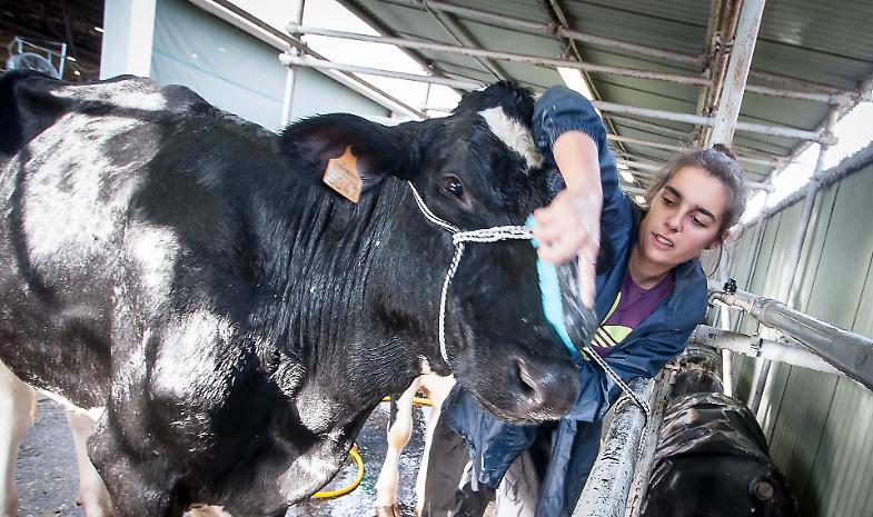 Fiere zootecniche internazionali, il futuro passa da Cremona
